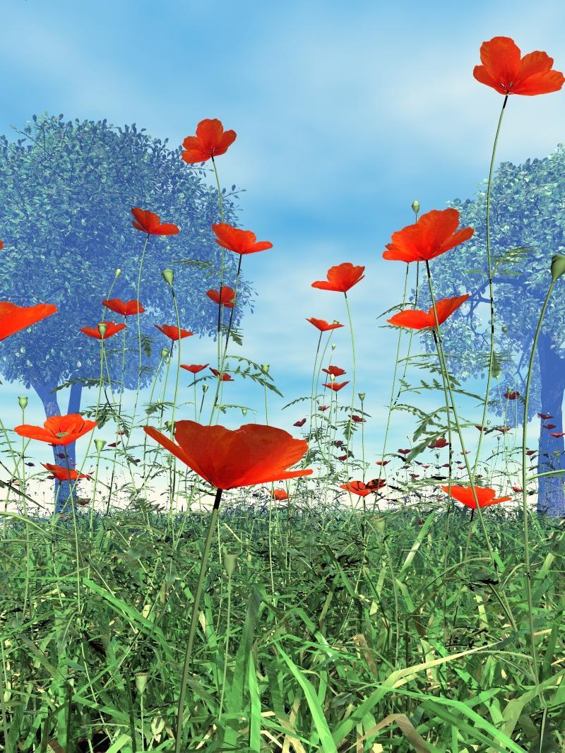 Poppy Meadow 2nd Version