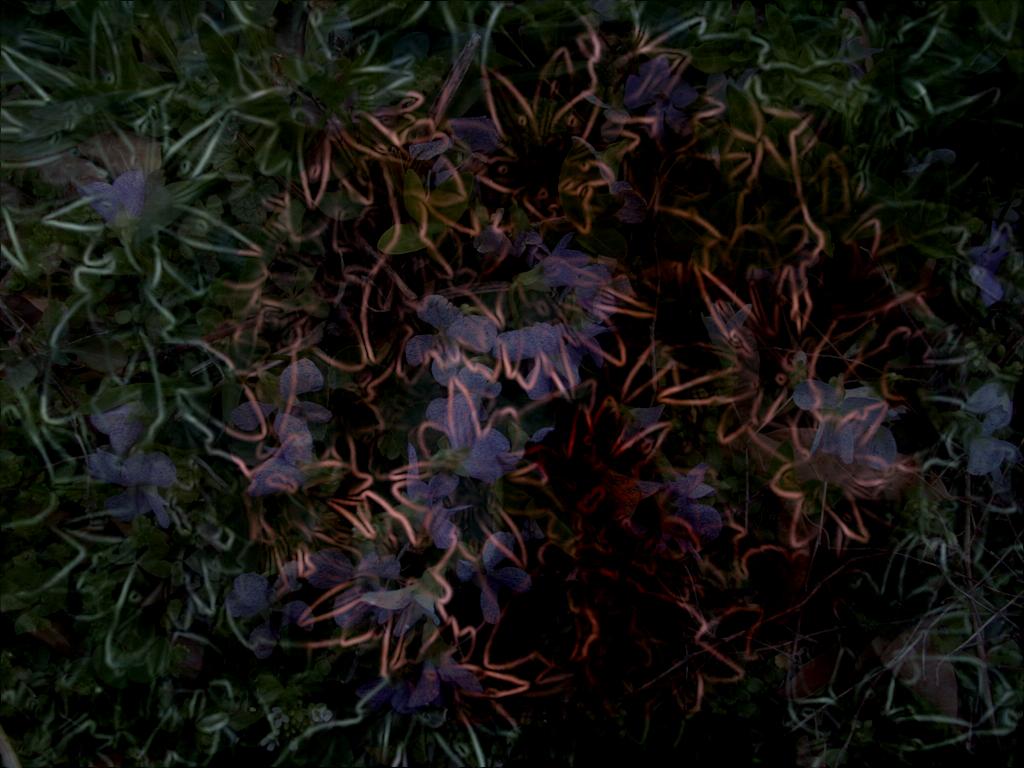 Sedum Bloom