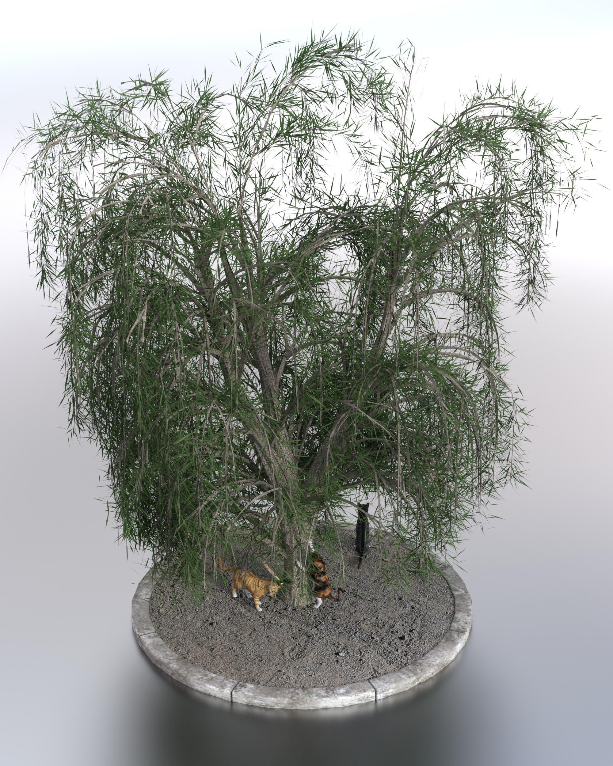Pussywillow (Multiclass Ranger-Druid Salix caprea)