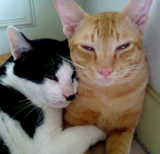 kitty kat forums
