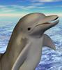dolphinius