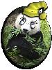 PandaB5